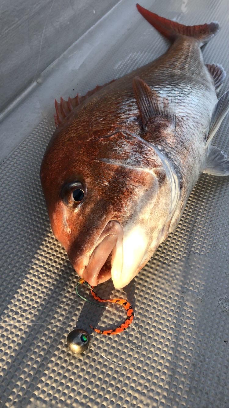 70cm大鯛を食べてみた【明石海峡タイラバ】